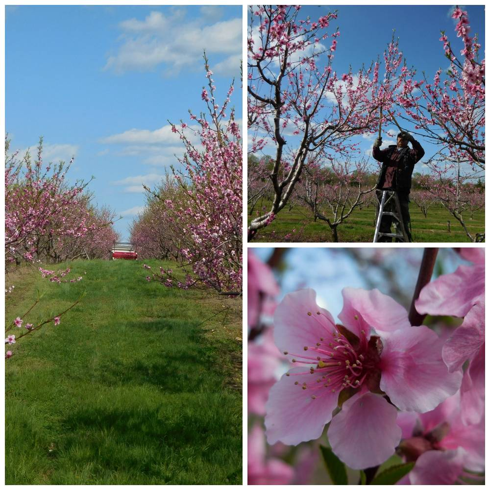Heilig Orchards Collage