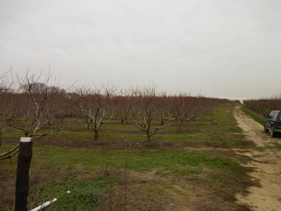 Heilig Field View
