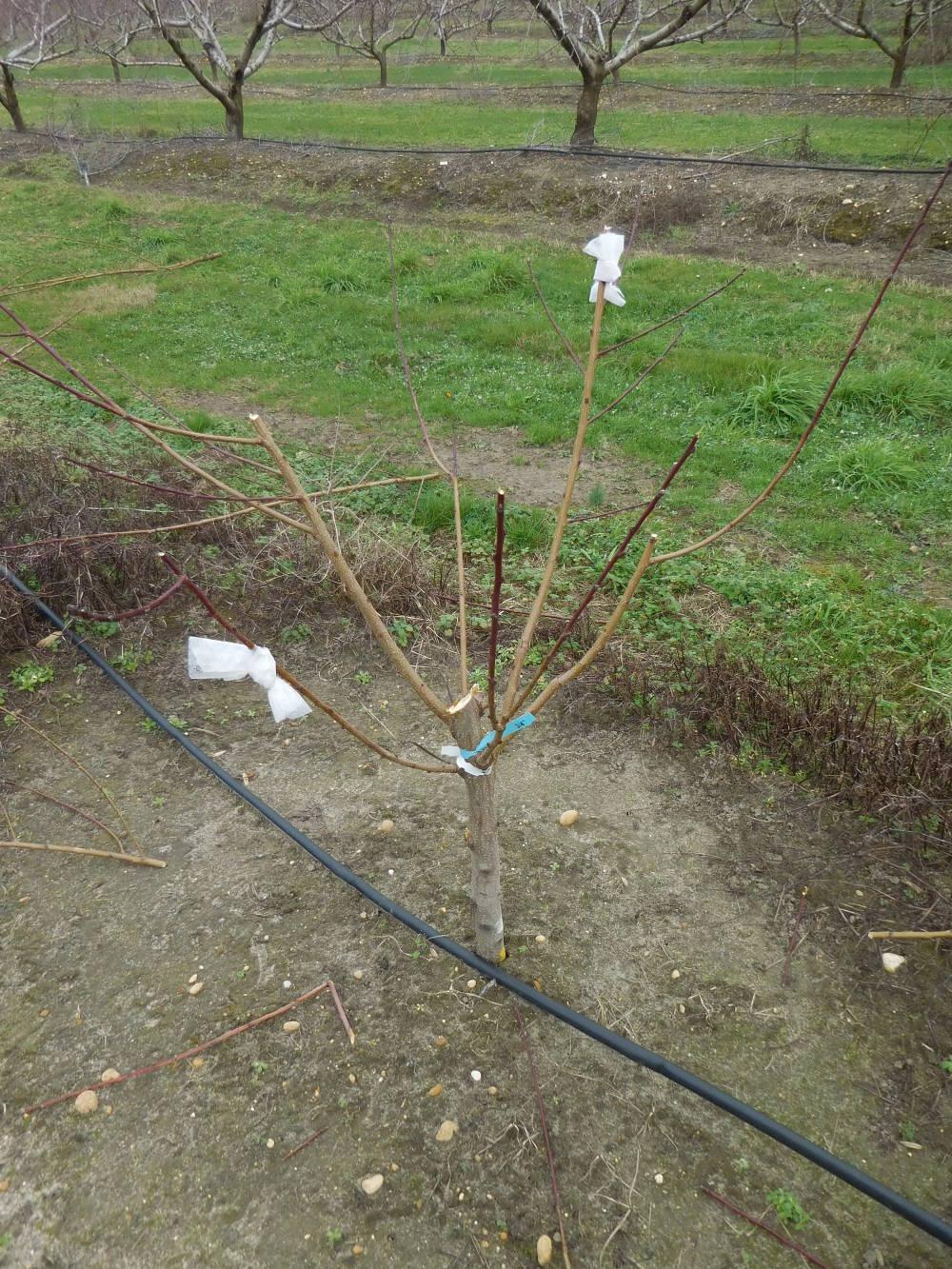 New Tree with Fabric Softner